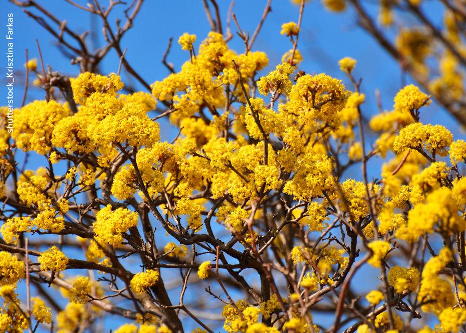 Adventskranz blumen risse sammlung von for Blumen und pflanzen bestellen